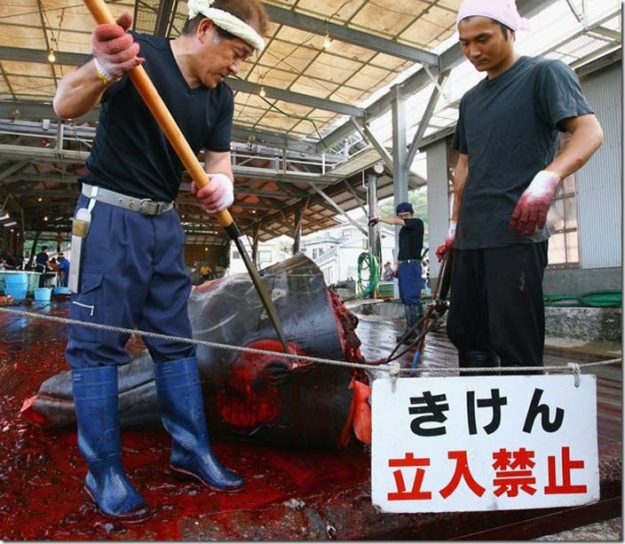 японцы убийцы китов