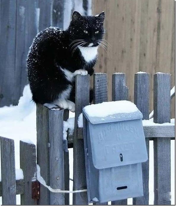 кот на заснеженном заборе